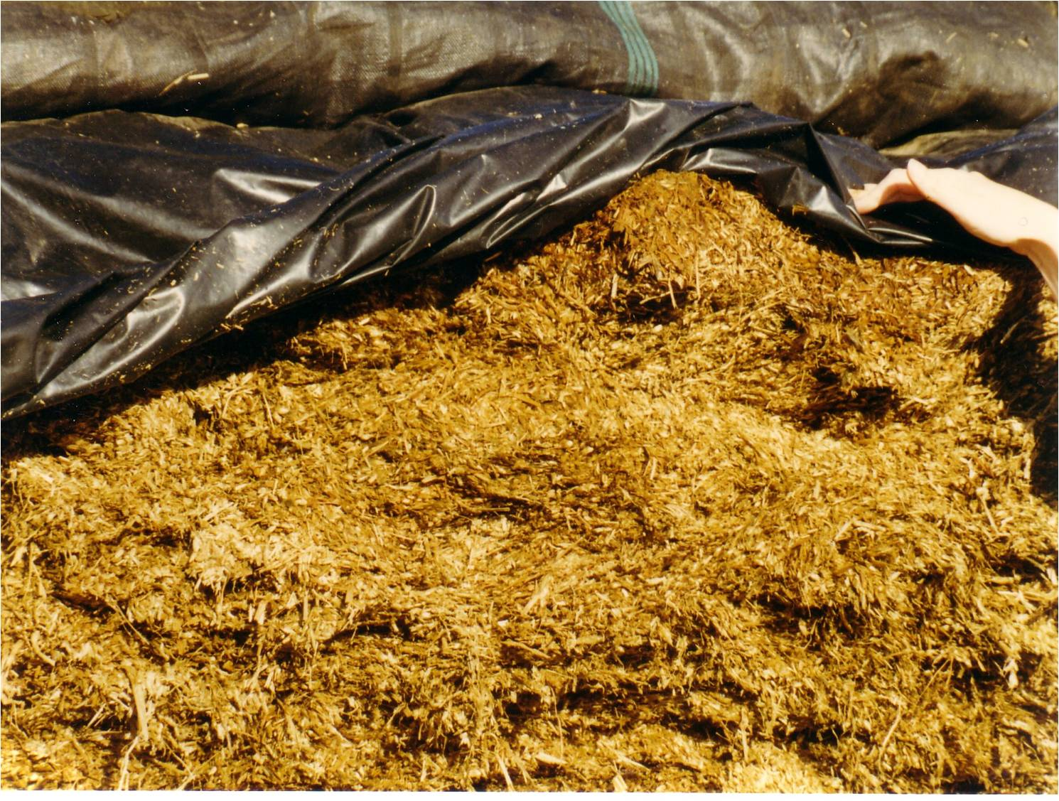 Open Silage Clamp